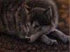 pacificwolf userpic