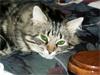 alles_the_cat