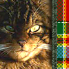 bot_a_glove userpic
