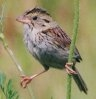 sparrow2000