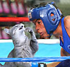 boxing_cat