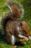 camcoons userpic