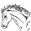 muse_scribbles: horse