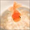 fishy ~jiatra