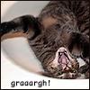 Killa: fierce cat in sink