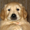 ugly_puppy userpic