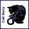 Cat!Harry.