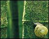 green snail :3