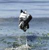 jadzia leap