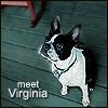 VA/Meet VA