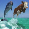 Cow & Dolphin, Dolphin & Cow