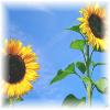 jedifaerie userpic