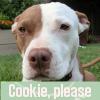 Mina - cookie