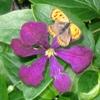 sammywol: butterfly