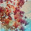 chinadoll5775 userpic