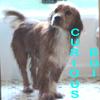 Kevenn: Humphrey Curious Boi