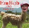 lama_girl userpic