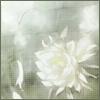 zephyrluse userpic