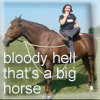 Big horse sam