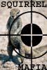 Hey YOU!: squirrel mafia