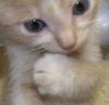 cat: kitten_thinker