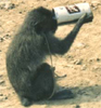 Beer and Monkeys