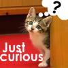 spedbug: CuriousCat