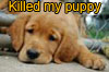 Puppy_killed (Ifritah)