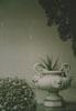 букинист, искусство, ваза, антиквариат