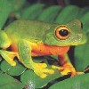 canadian_frog userpic
