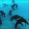 ocean - sea lions