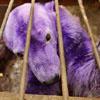 purple beh too