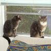 nozzlecats userpic