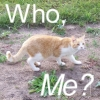 camelthecat userpic