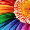 Random: Rainbow flower