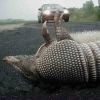 Arthur and Kevin's Nellorat: armadillo_squashed_by_misfortune