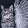 whitewingedcat userpic