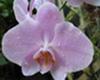 chambord userpic