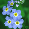 adnelg userpic