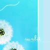 ♥Junie: [misc] dandelion //