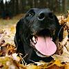 Karen T: Misc - dog in leaves