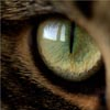 k0t_igrun: cat eye