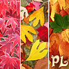 PL: PL autumn trio