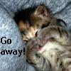 sunkissedshadow userpic