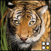 tx_hive_queen userpic