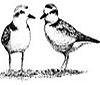 littlestbirds userpic