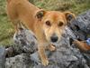 Ireland dog