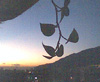 bitecaro userpic