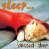 sleepy, awww