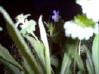 azure_shades userpic